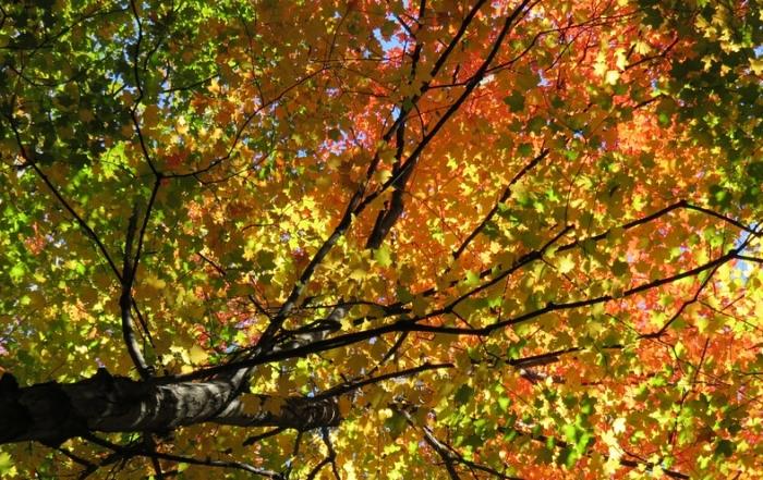 fall-1021535_960_720